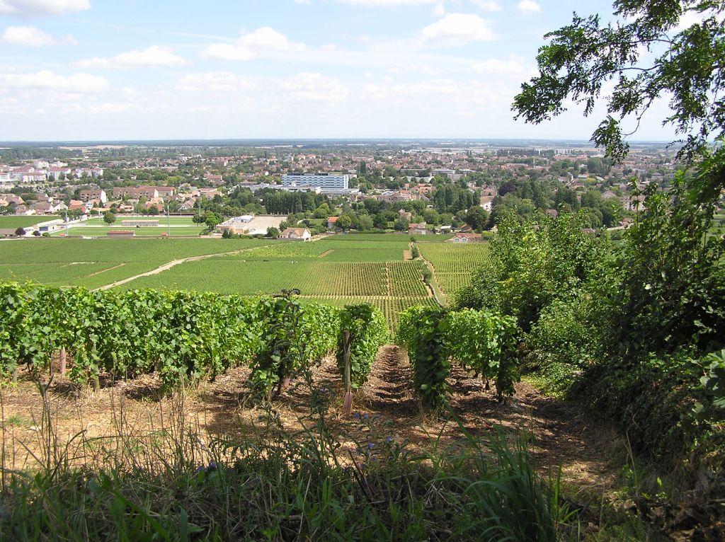 le vignoble bourguignon près de Beaune
