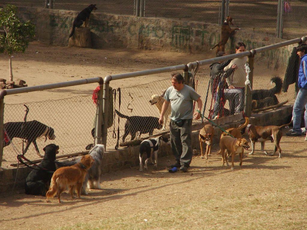 Promeneurs de chiens dans les parcs de Buenos Aires