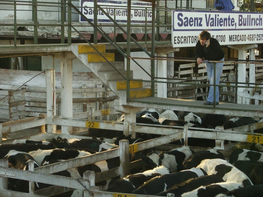 Le plus important marché aux bestiaux d'Argentine