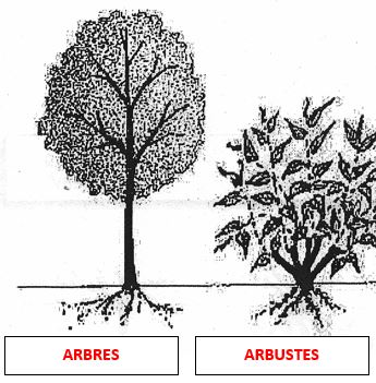 Classification horticole Cours.JPG