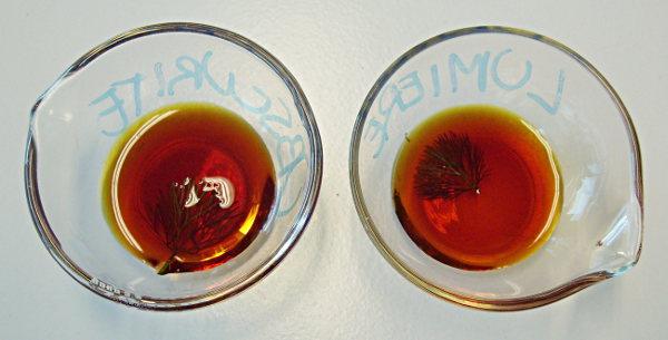 Coloration Cabomba eau iodée