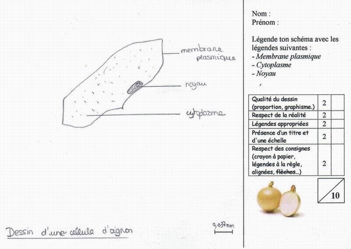 calcul grossissement microscope