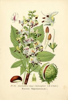Masclef, A ; Klincksieck, P. Atlas des plantes de France. P., Klincksieck, 1893. Tome1