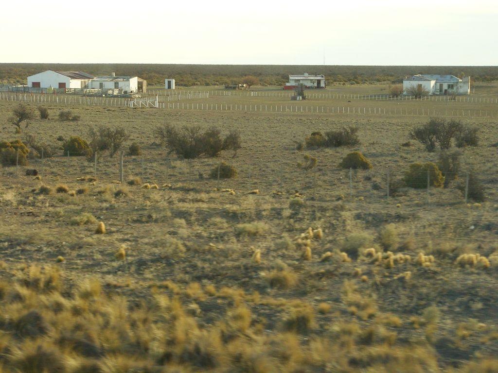 La patagonie centrale, région d'élevage extensif