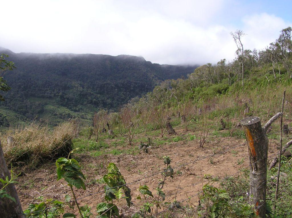 champ abandonné au sud du parc Amboró