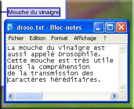 Affichage d'un texte dans le bloc-notes