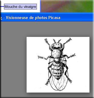 Affichage de l'image