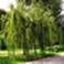 Vignette jardin.png